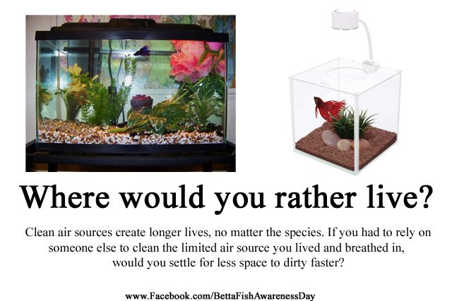 what it means to truly rescue a betta fish bettasmart