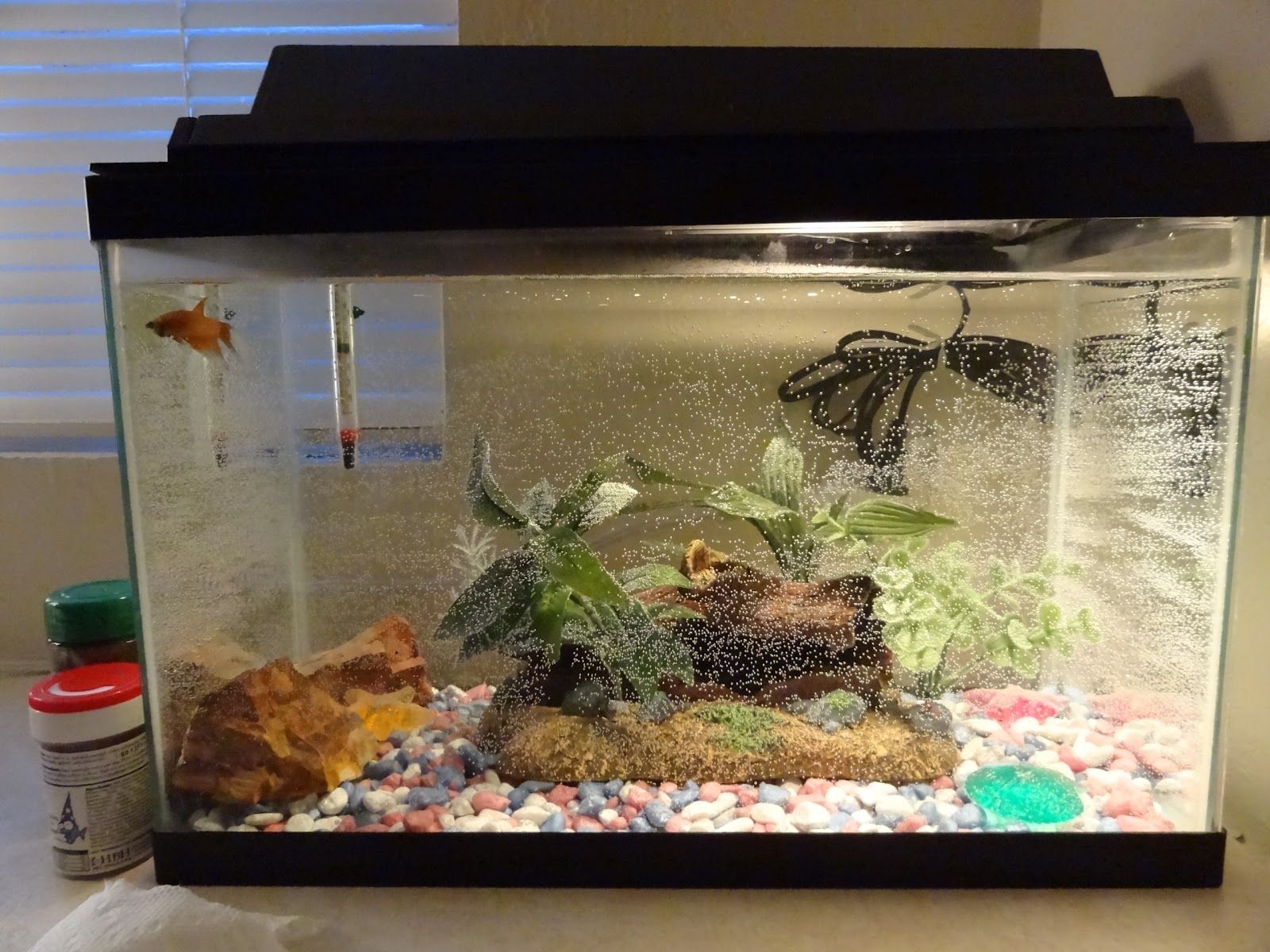 The betta fish tank debate bettasmart for Smart fish tank