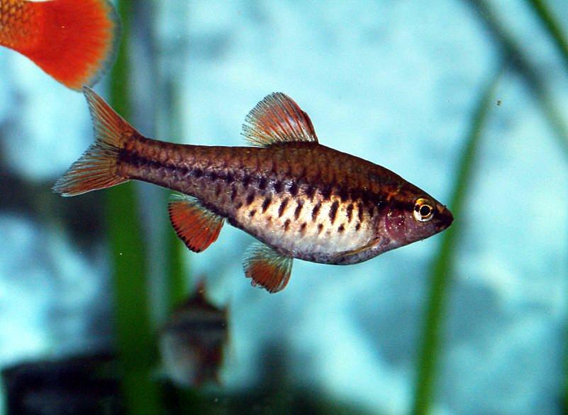 aqua one fish feeder instructions