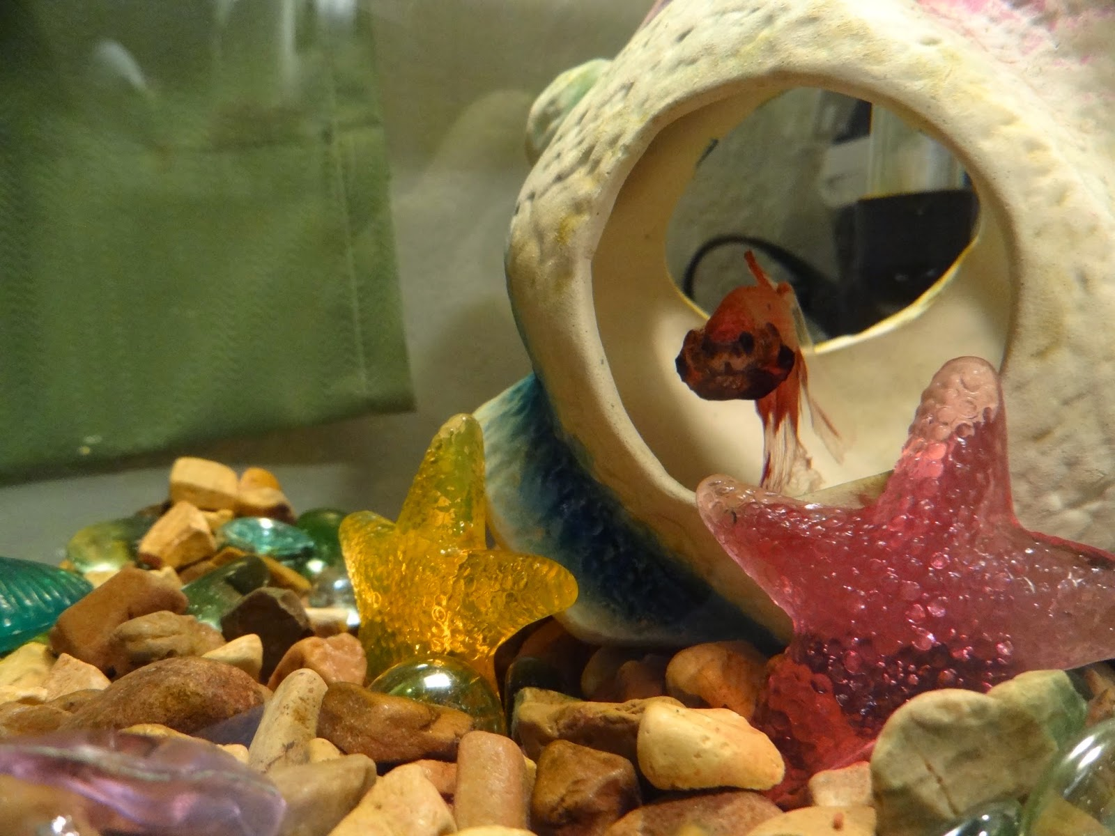 The Top Five Most Common And Deadly Betta Fish Care Mistakes Bettasmart